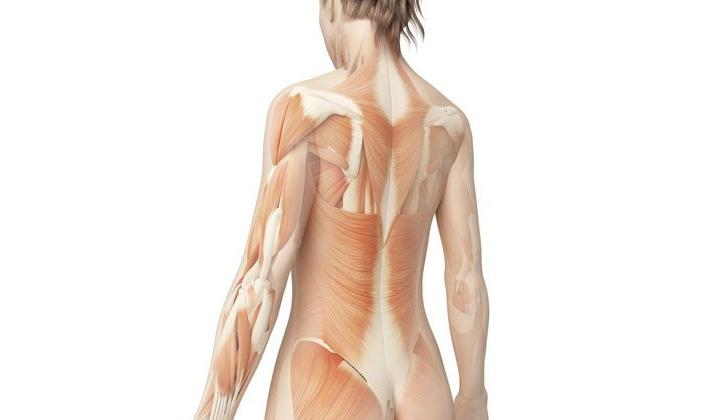 解剖学に基づく根拠技術